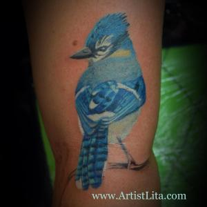 Realistic blue jay bird tattoo